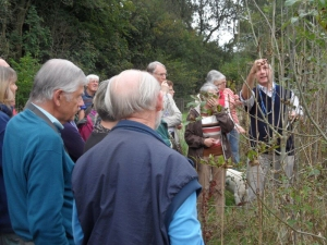 Learning how to recognise Ash Dieback