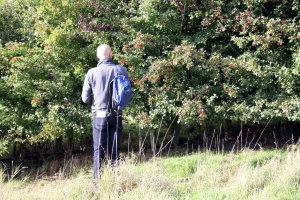 Looking at a young hedgerow at Bough Beech