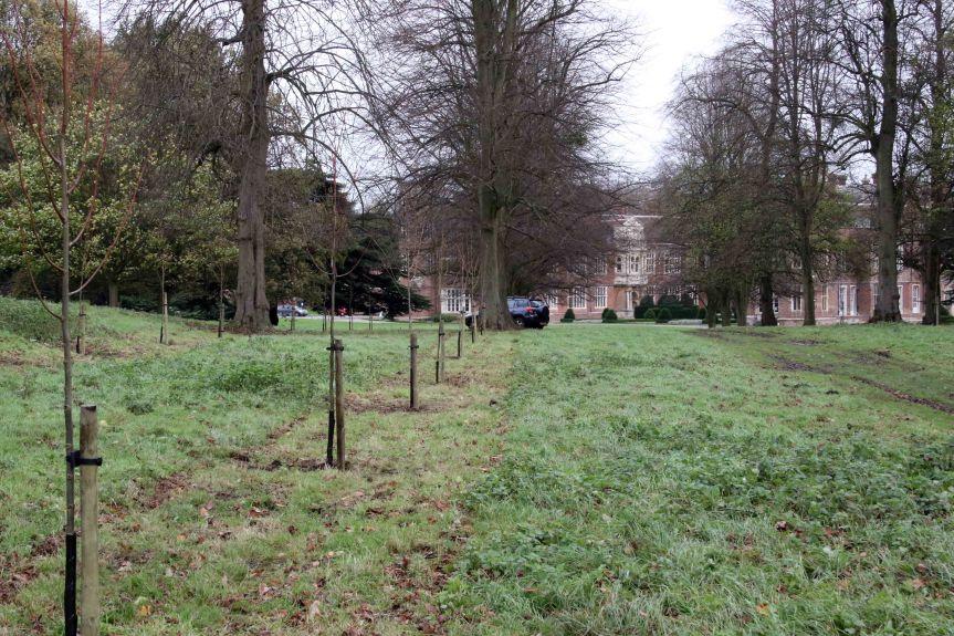 IMG 0645 Tree planting Cobham Hall 2015-11-28 c1e