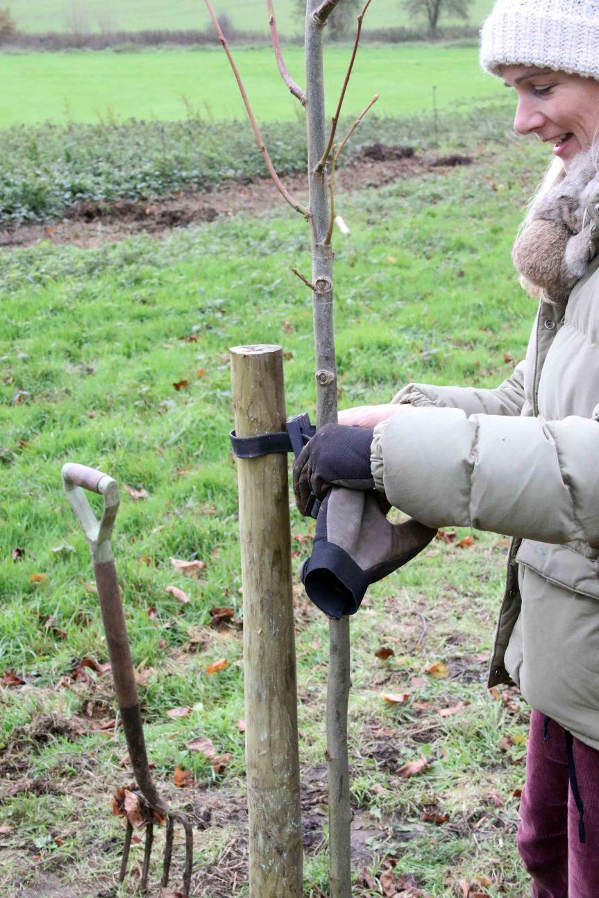 IMG 0653 Tree planting Cobham Hall 2015-11-28 c1e