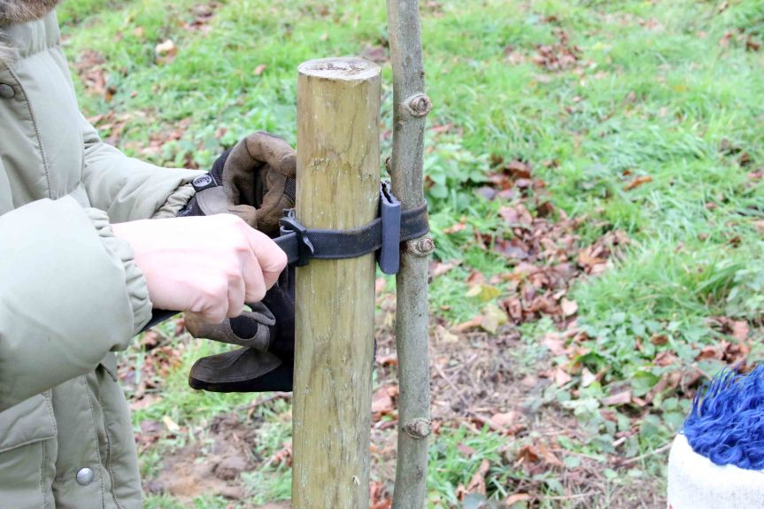 IMG 0666 Tree planting Cobham Hall 2015-11-28 c1e