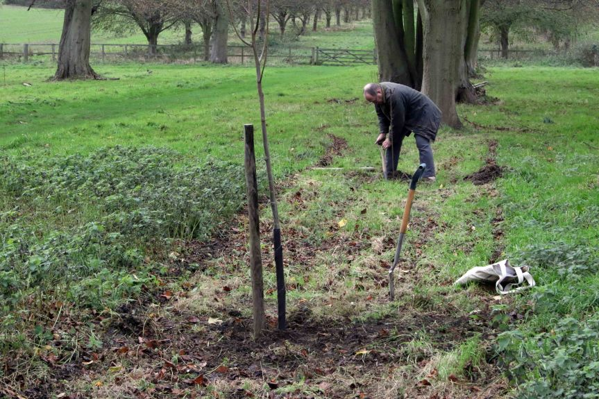IMG 0691 Tree planting Cobham Hall 2015-11-28 c1e