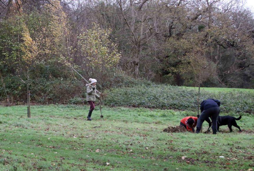 IMG 0694 Tree planting Cobham Hall 2015-11-28 c1e.jpg