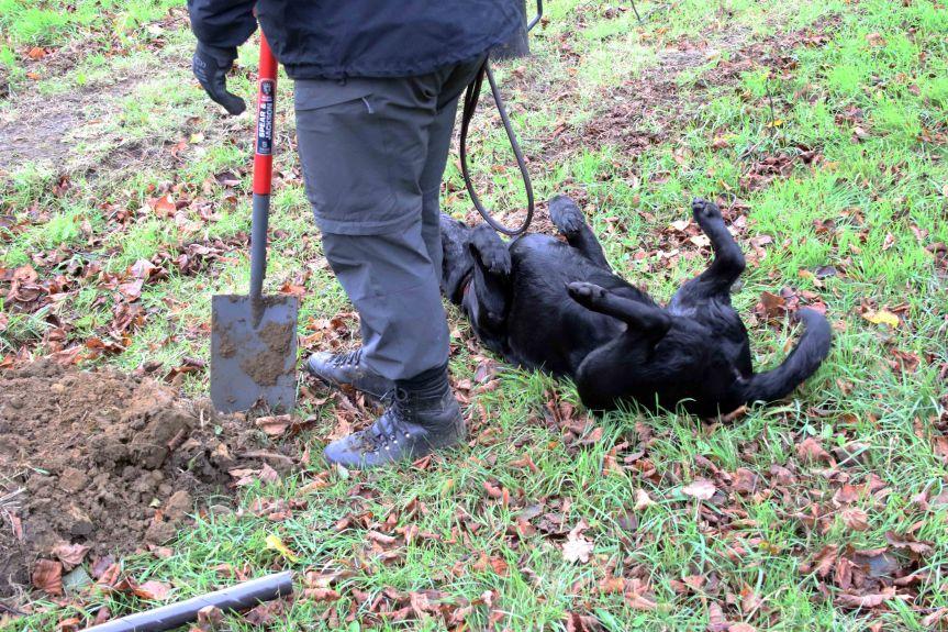 IMG 0704 Tree planting Cobham Hall 2015-11-28 c1e