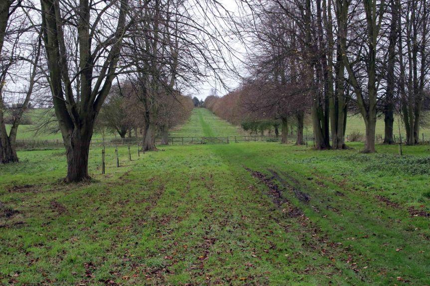 IMG 0709 Tree planting Cobham Hall 2015-11-28 c1e