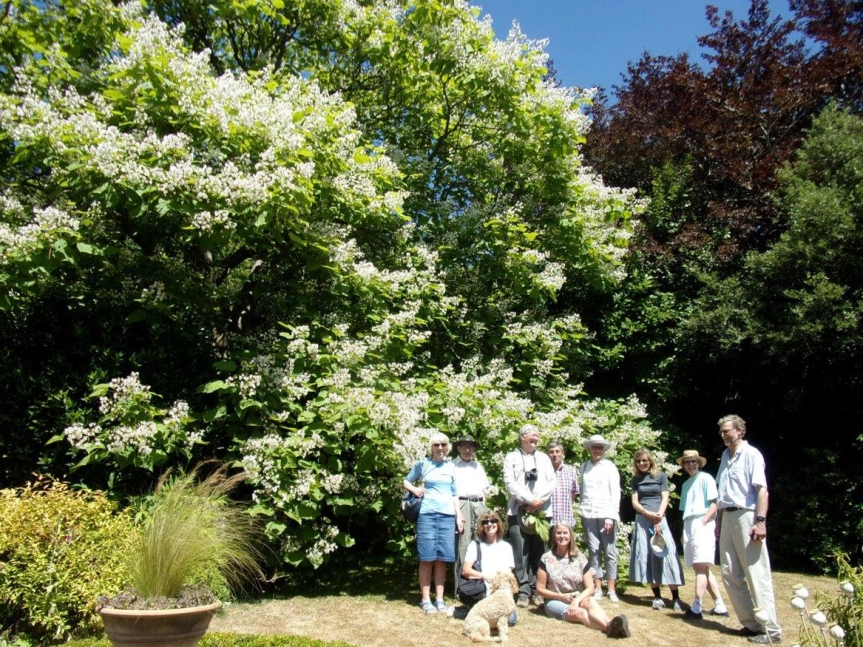 RIMG1842 Catalpa bignonioides Wildings Tunbridge Wells 15-07-2018 2