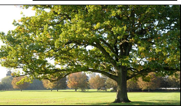 tree-dorset